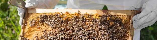 cropped-bigstock-beekeeper-working-in-his-apiar-63117133-960-pixels-wide.jpg